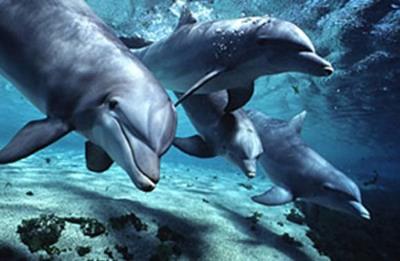 Секс у дельфина для удовольствия