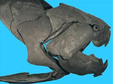 10 странных доисторических животных